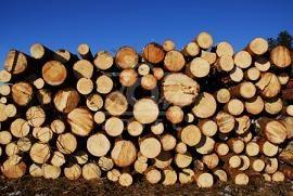 Drewno  KOMINKOWE I OPAŁOWE TANIO!!