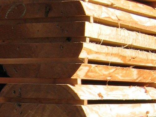 Cedr, sosna i inne gatunki drewna dostawa z Syberii