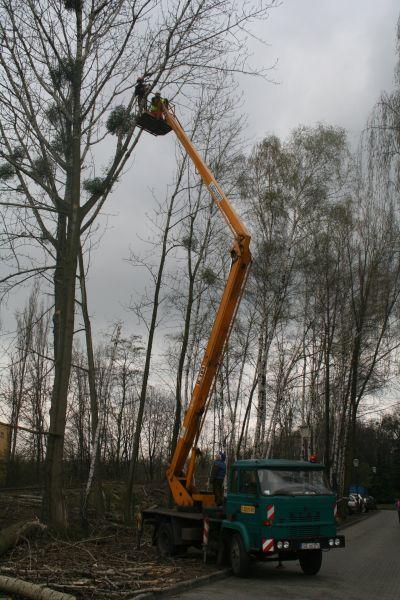 Wycika drzew