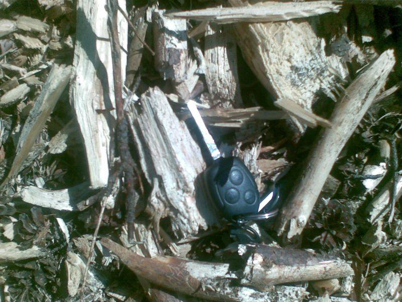Kupimy zrębkę leśną - także z igliwiem - każda ilość.