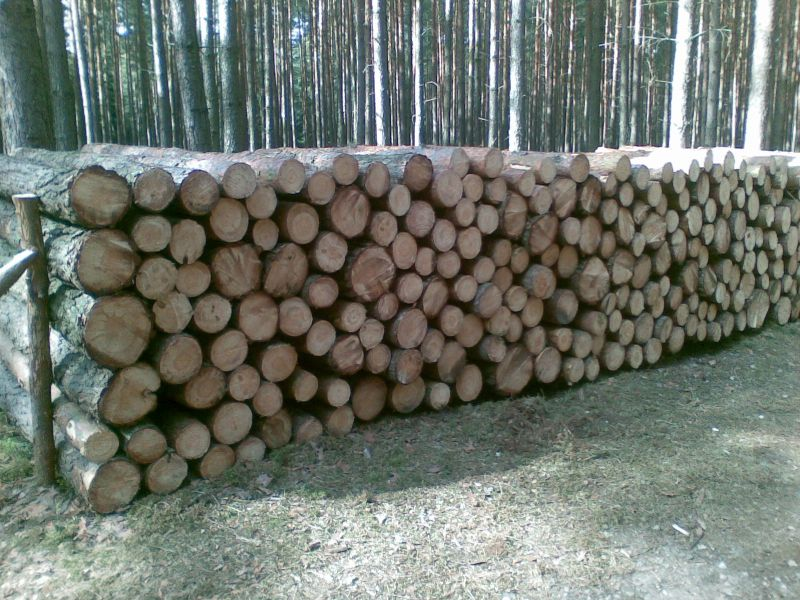 sprzedam drewno sosna