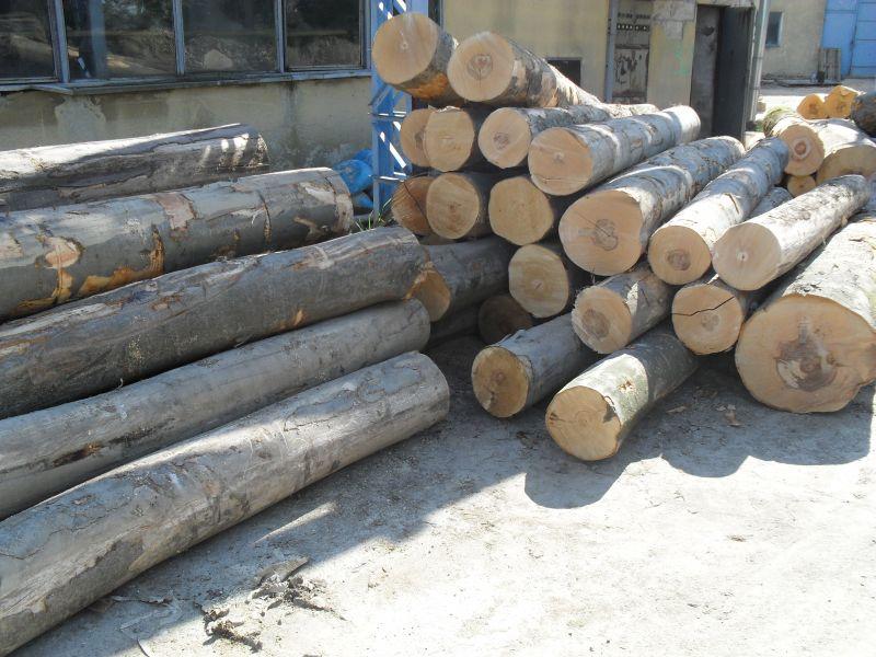 Drewno okrągłe Buk