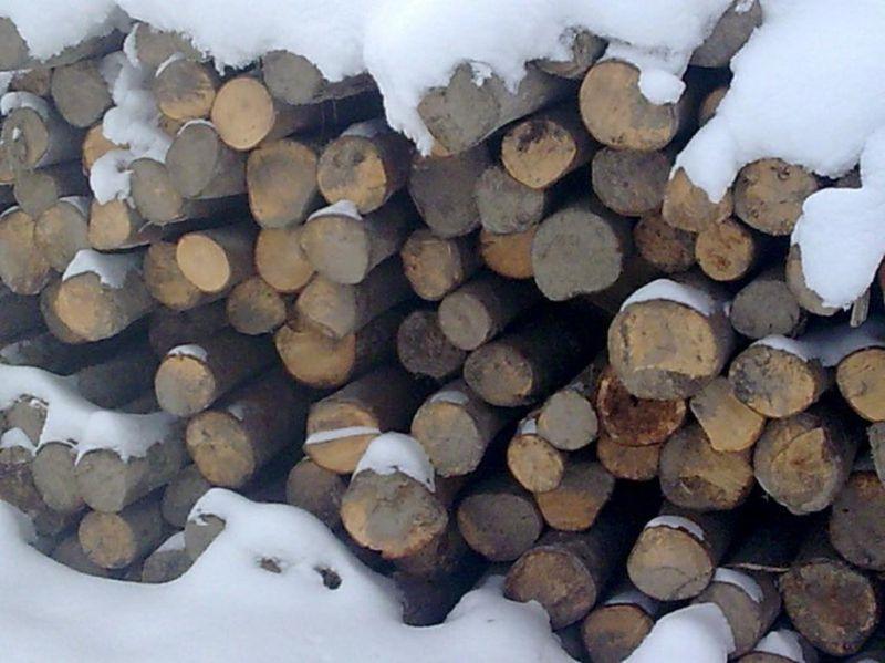 sprzedam stemple budowlane brzozowe jelenia góra
