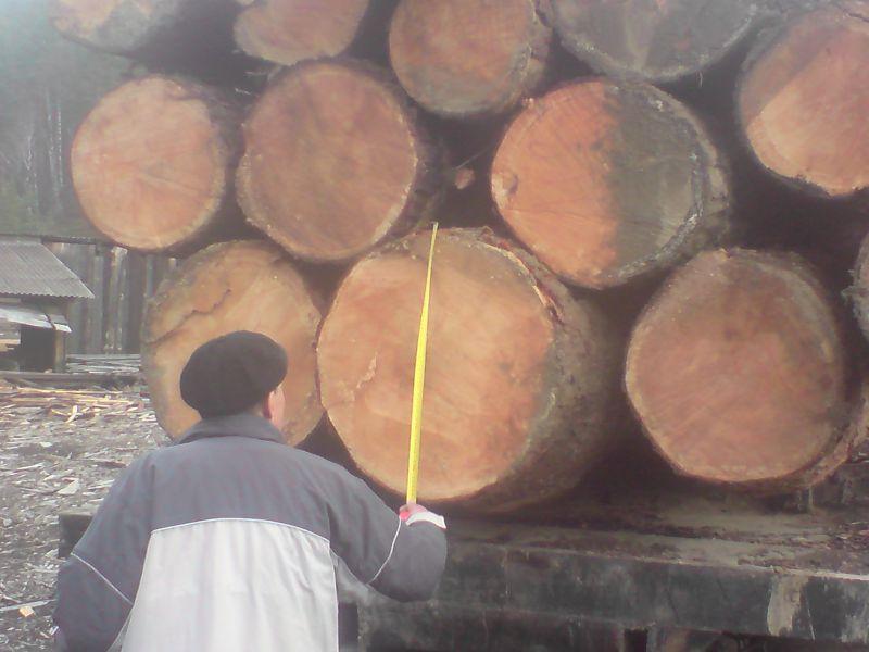 Poszukuję poważnego inwestora do importu drewna z Syberii