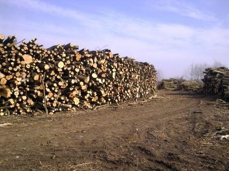 Sprzedam drewno stosowe liściaste na kominek. Wrocław 800m3