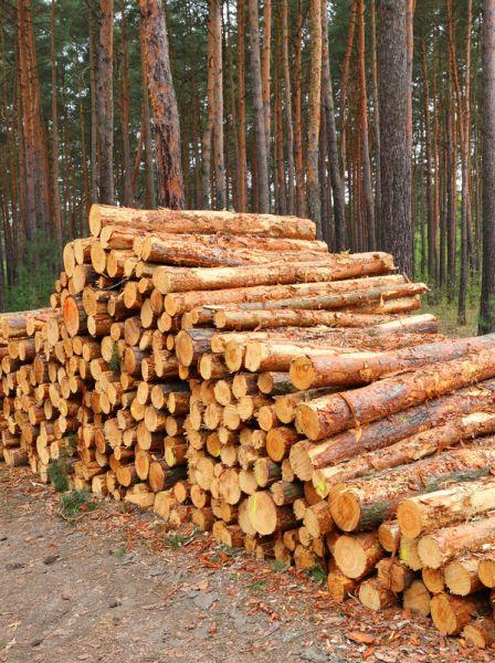 Kupię las- gotówka od ręki