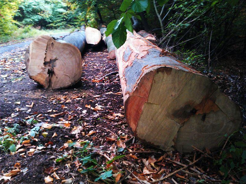 BUK drewna okrągłego