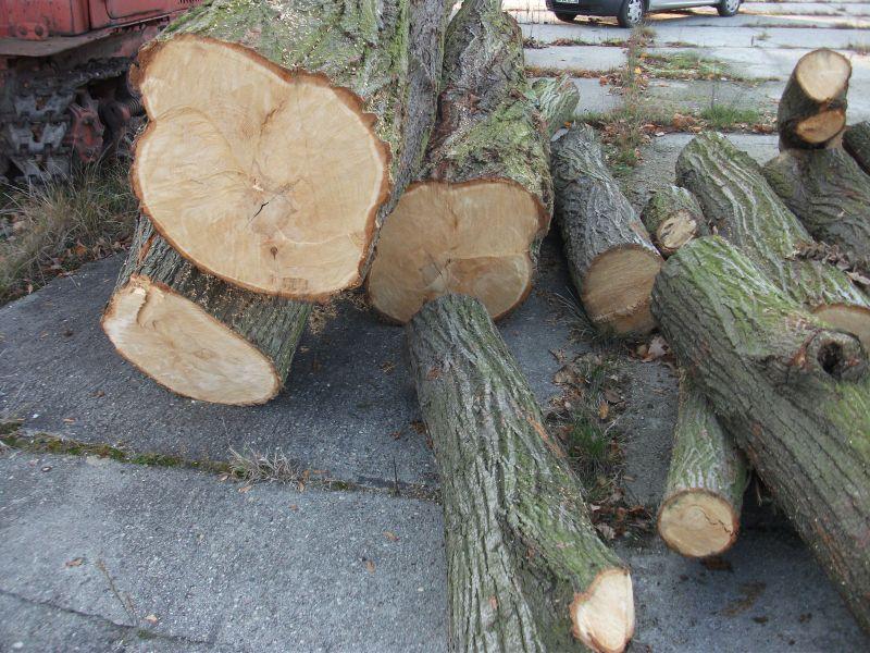 sprzedam drewno lipowe