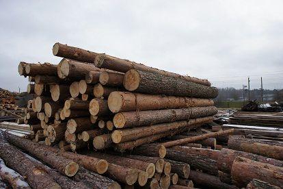 drewno z Białorusi