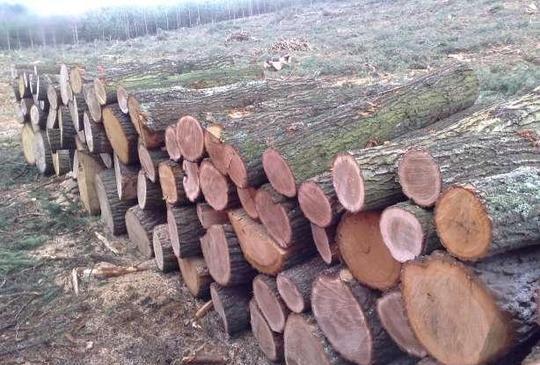 Drewno Opałowe, Do Wędzenia
