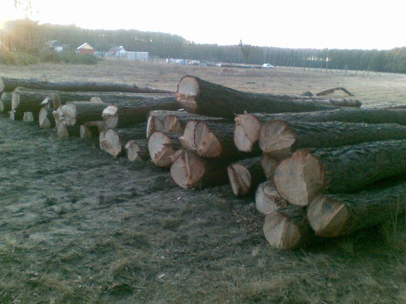 Drewno Tartaczne - Surowiec Tartaczny Sosnowy 280zł/1m3