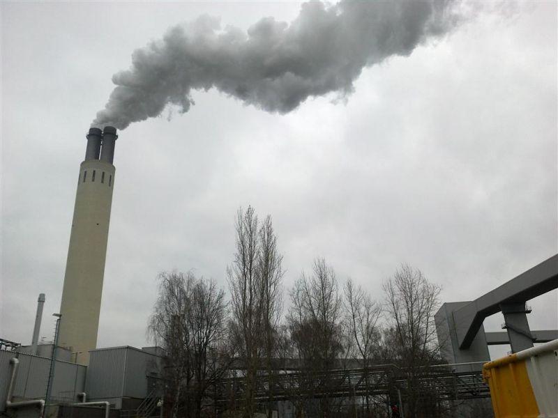 Koncern kupuje biomasę drzewną z dostawą do Niemiec.