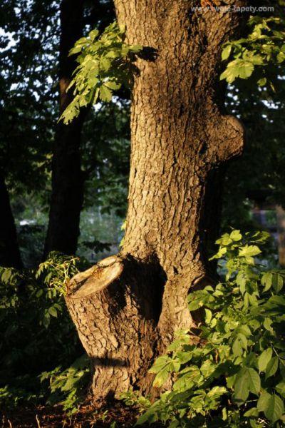 Drewno dla domu