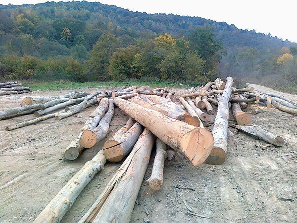 Drewno BUK od Producenta Słowacja - zapraszam