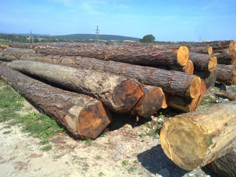 drewno modrzew w kłodach ok  60 m3