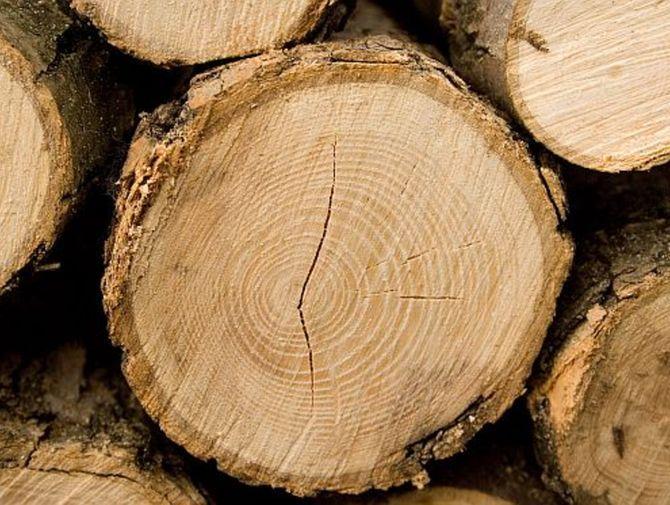 Sprzedam drewno okrągłe Dąb oraz Sosnę