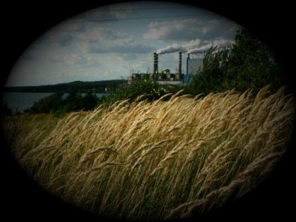 Kupię biomasę na potrzeby energetyki