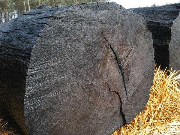 Ukraina.Czarny dab,surowiec drewna kopalnego.Tanio
