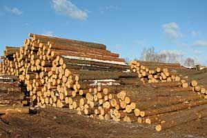 Ukraina.Do darmowego odbioru kora sosnowa luzem,odpady drewnopochodne