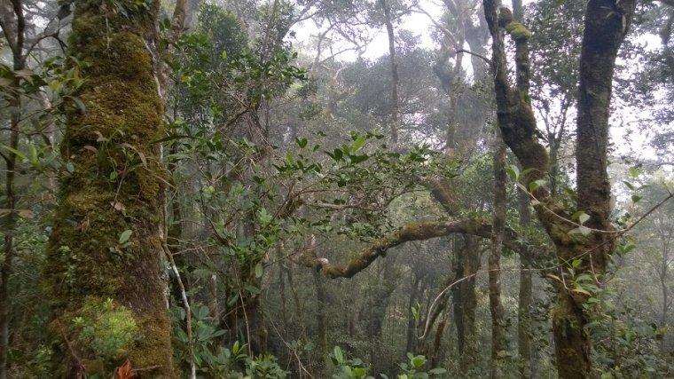 Las wysokogóski.