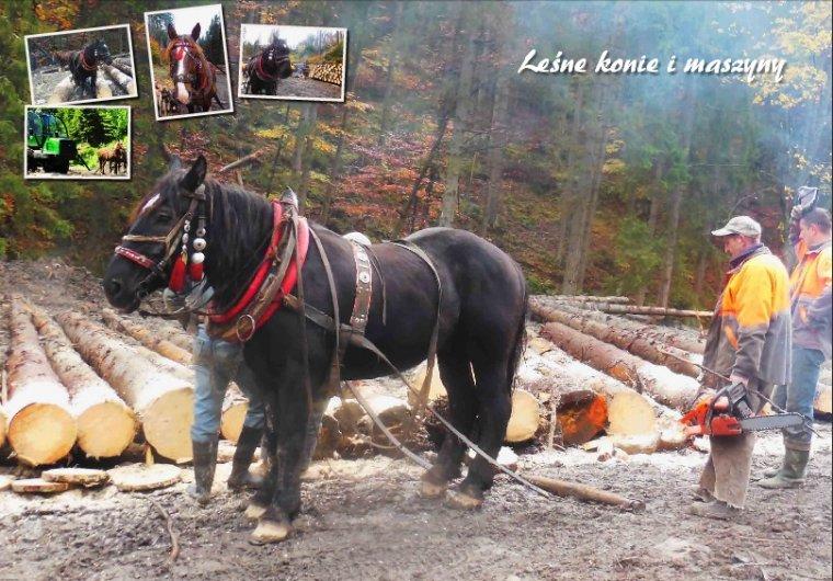 Leśne konie i maszyny w Kolegium Cieszkowskich