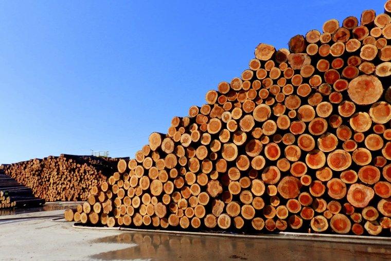 Kierunek prowadzonych przez Lasy Państwowe zmian sytemu sprzedaży drewna grozi upadkiem polskiego przemysłu drzewnego - uważa PIGPD