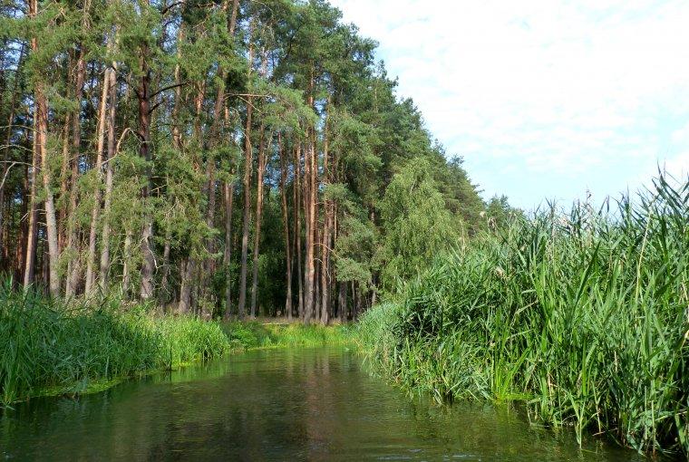 Posłowie PO złożyli projekt zmian w ustawie o lasach