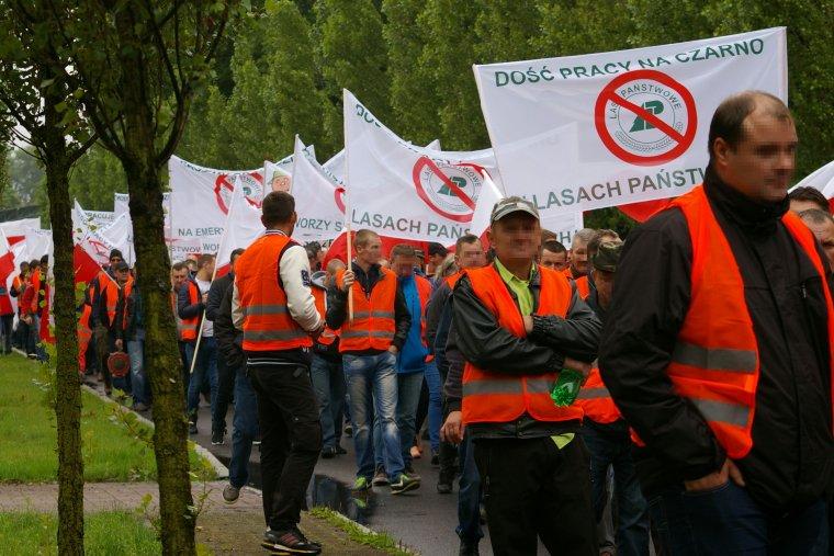 Przedsiębiorcy leśni chcą zamiany polityki Lasów Państwowych w zakresie kształtowania rynku usług leśnych
