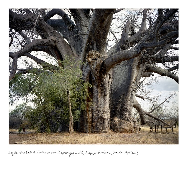 Sunland Baobab w RPA