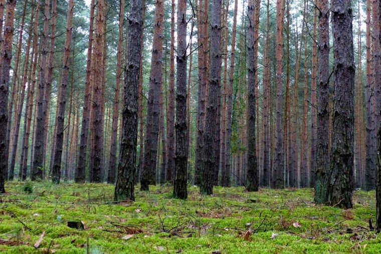 Senat zaakceptował nowelizację ustawy o lasach