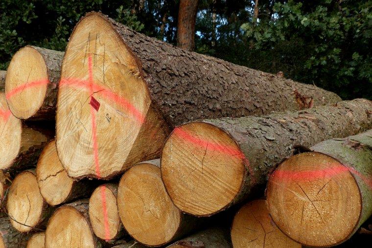 Przedstawiciele przemysłu wykluczeni z Rady Leśnictwa?
