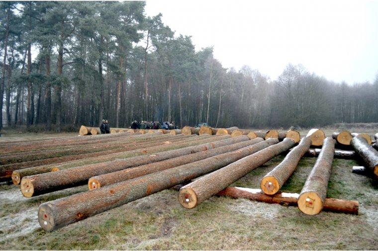 Pierwsza Regionalna Submisja Drewna Cennego RDLP w Radomiu