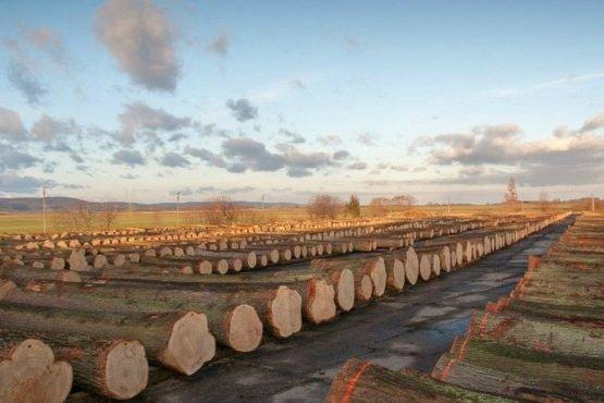 Drewno z nadleśnictw RDLP Wrocław przygotowane do oględzin