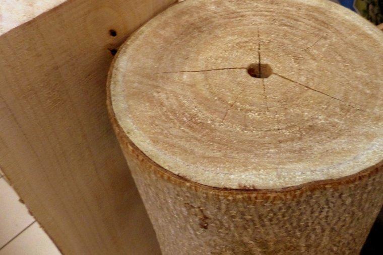 6-letnie drzewo Oxytree nadaje się do przerobu przemysłowego