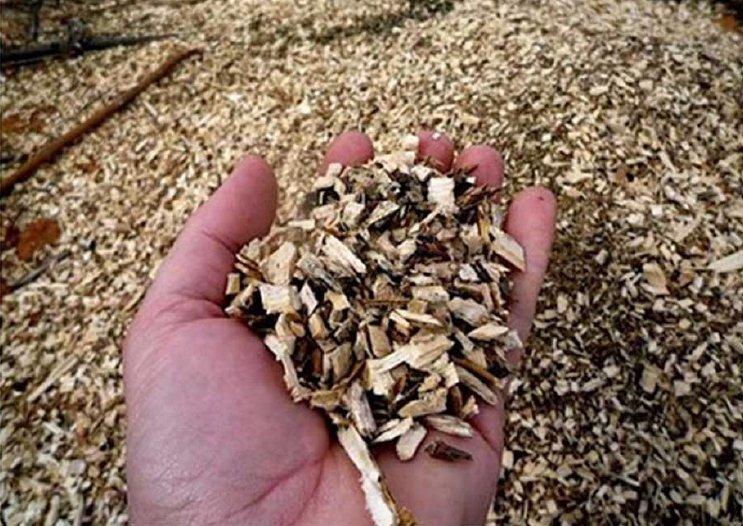 Zrębki wyprodukowane z drewna Oxytree