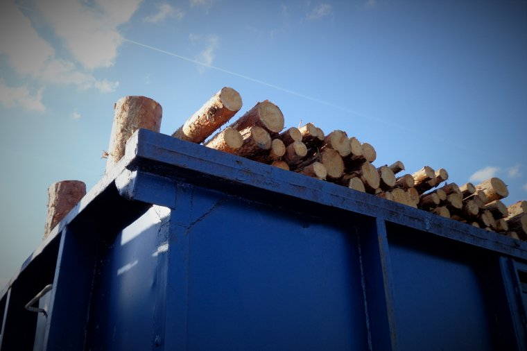 Ukraina: Nie czas żałować lasów