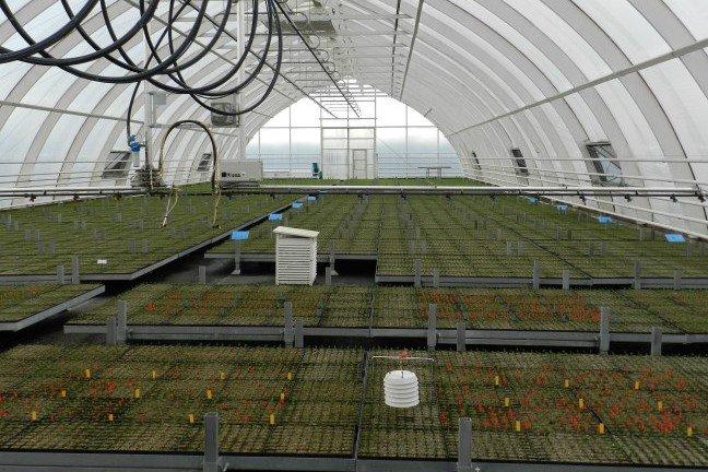 Produkcja sadzonek z zakrytym systemem korzeniowym