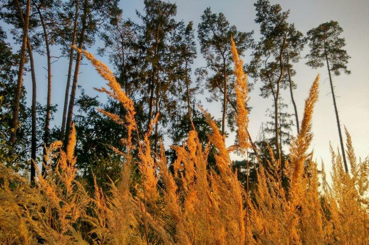 Lasy Państwowe korzystają z prawa pierwokupu nieruchomości leśnych
