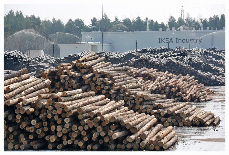 Polska jest największym na świecie dostawcą drewna dla Grupy IKEA