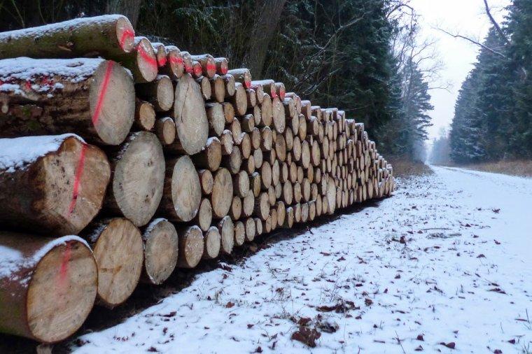 Grupa Stelmet zawarła z Lasami Państwowymi umowy na dostawy drewna wartego blisko 113 mln zł.
