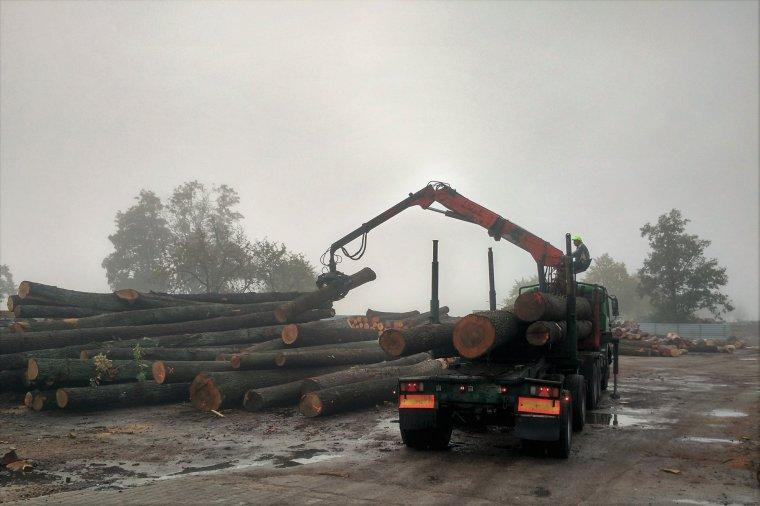 Klon: Umowy dostaw surowca z Lasów Państwowych