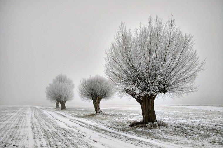Czy rolnik może wyciąć drzewa bez zezwolenia?