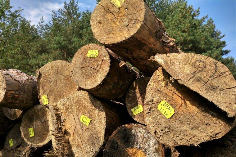 Narada przemysłu drzewnego na temat sytuacji na rynku surowca drzewnego
