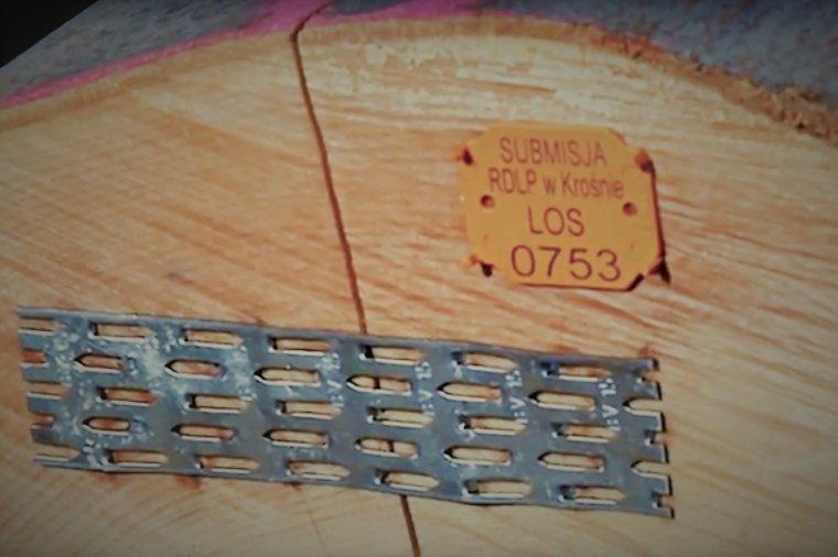 Submisja drewna cennego w RDLP Krosno