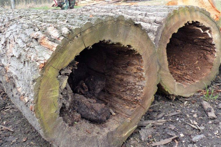 Projekt rozporządzenia w sprawie wysokości stawek opłat za usunięcie drzew i krzewów