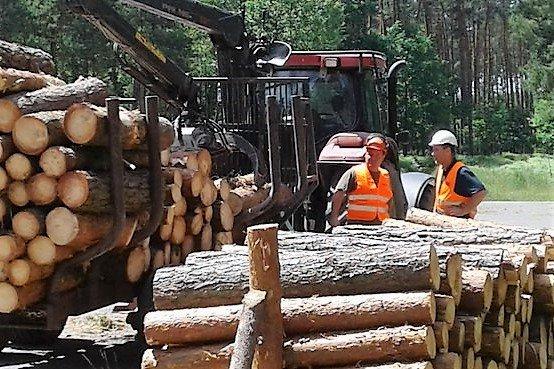 Certyfikat dla lasów Podkarpacia
