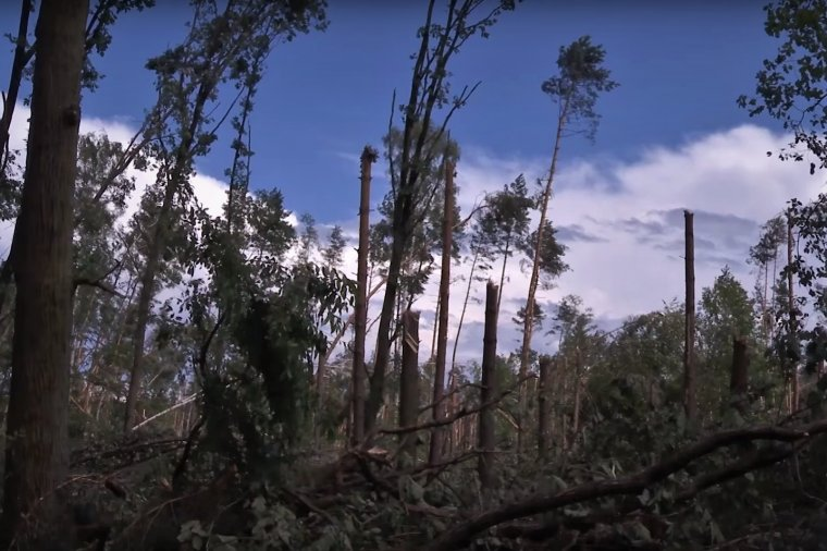 Trwa usuwanie skutków huraganu w Rudach Raciborskich