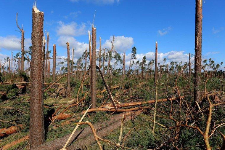 Klęska wiatrołomów w polskich lasach
