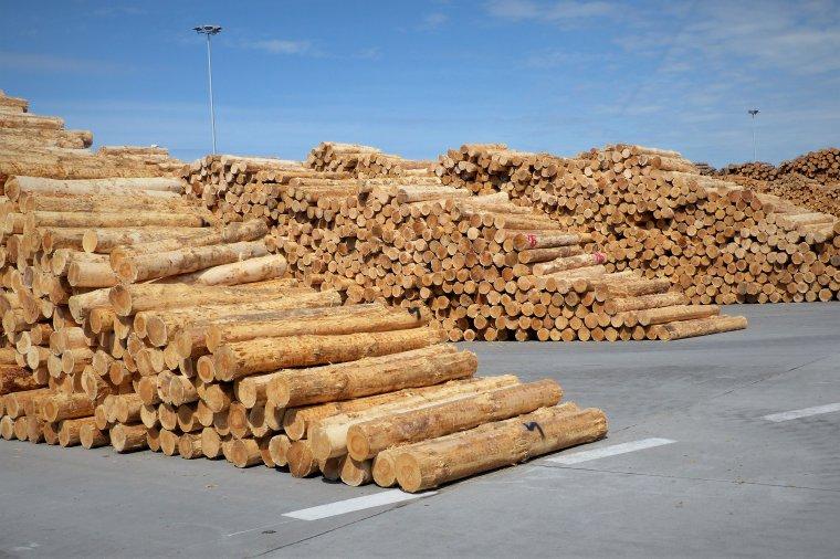 11 firm wybranych do podpisania umów z Dyrekcją Generalną Lasów Państwowych