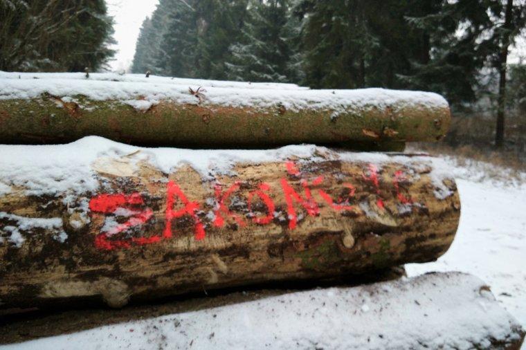 PIGPD wzywa do anulowania dotychczasowych wyników procedury sprzedaży drewna i jej powtórzenia